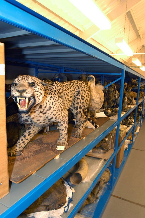 Our expertise and experience in museum storage will increase the efficiency of your museum and offer you the ideal museum storage solution for securely storing retail artefacts and collectables while maximising the available storage space of an area.